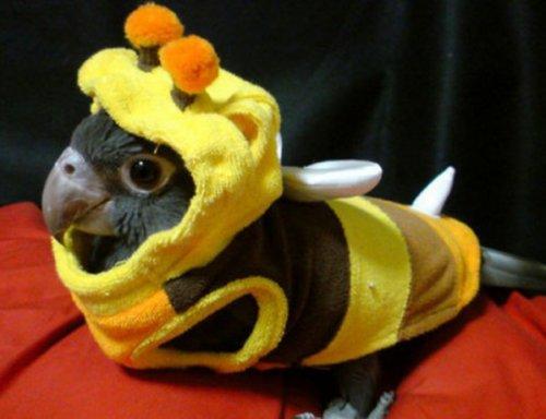 Животные в костюмах пчёл (10 фото)