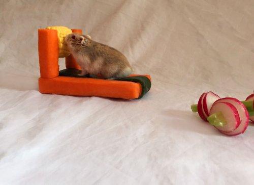 Овощной фитнес для хомячков (6 фото)