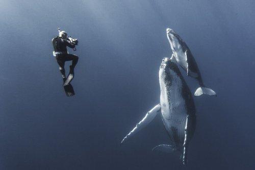 Впечатляющие фотографии китов, сделанные подводным фотографом Габи Баратью (29 фото)