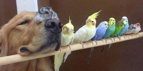 Замечательные животные, которые поднимут вам настроение (25 фото)