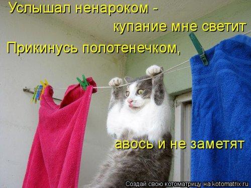 Свежая котоматрица (29 фото)