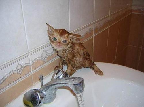 Кошки, перед которыми нужно извиниться (13 фото)