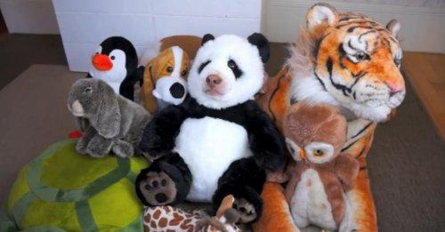 Панда смешно ест вафельный рожок