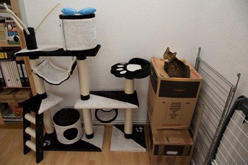 Непостижимая кошачья логика (35 фото)