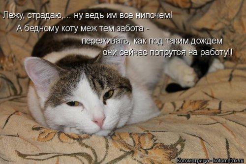 Еженедельная котоматрица (26 фото)