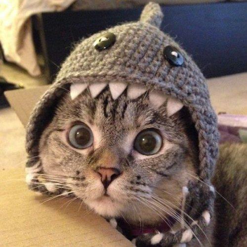 Самая знаменитая кошка в Instagram с 2,3 млн подписчиков (15 фото)