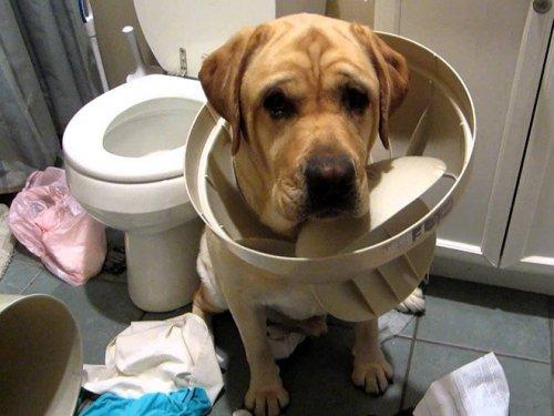 Собаки, пойманные с поличным (16 фото)