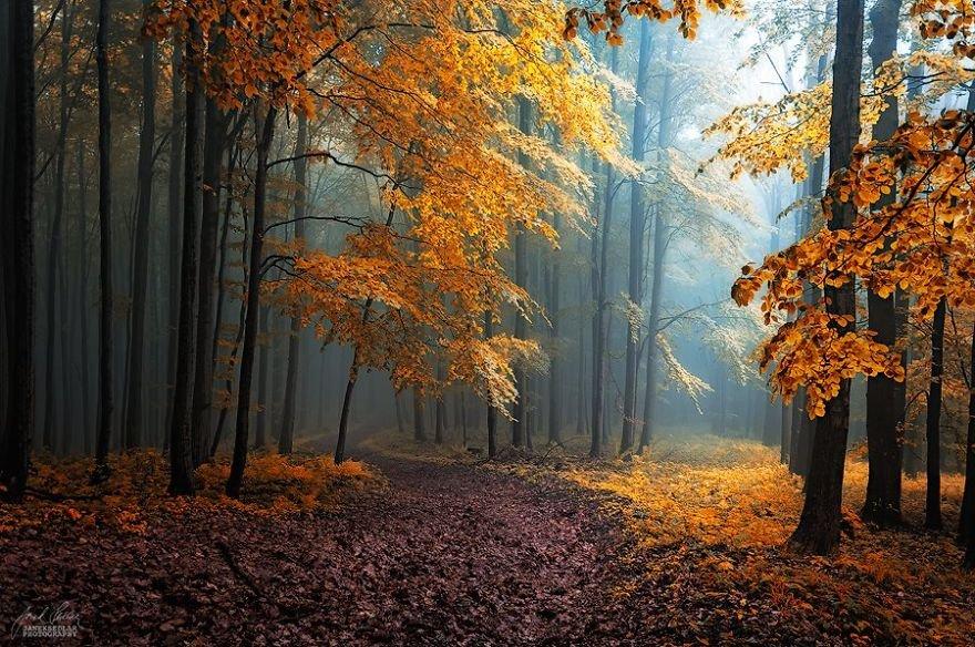 удивительно гостеприимное красота осеннего леса фото мире