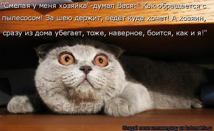 Смешные коты фото и фразы