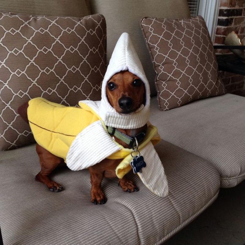 Картинка смешная собака в одежде, февраля анимацией