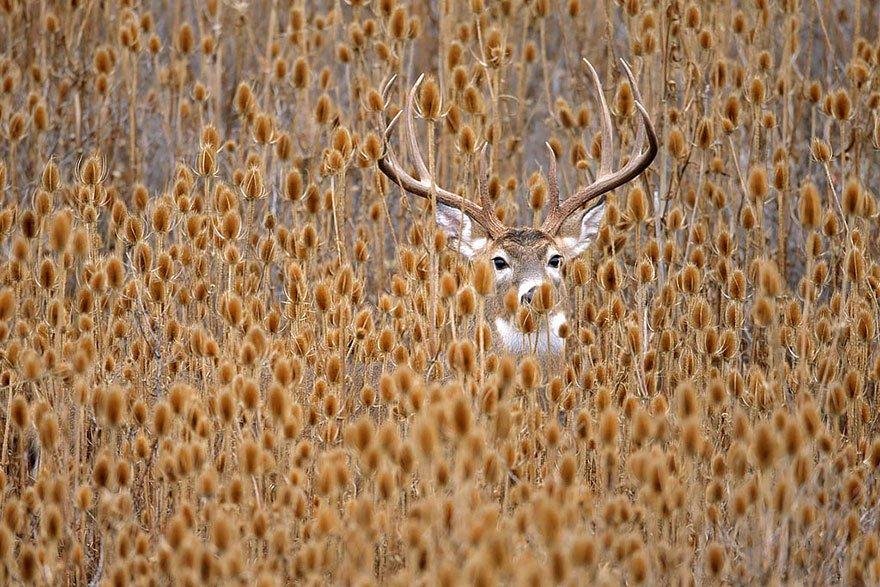 Картинки с изображением зверей осенью