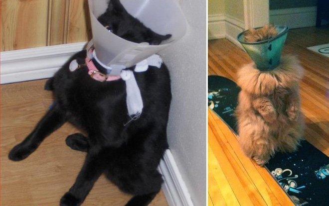 Чем вылечить болячку у кошки на шее