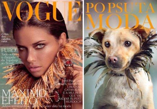 """Кампания """"Po Psu Ta Moda"""", с помощью которой собаки из приюта обретают дом (11 фото)"""