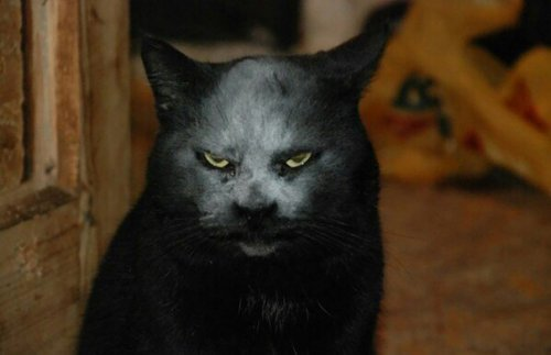 Кот-демон, фотография которого облетела весь Интернет (4 фото)