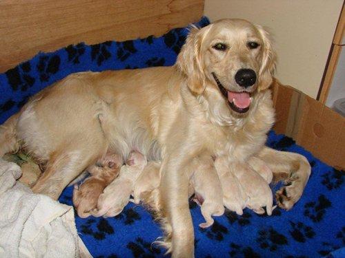 Гордые мамочки очаровательных щенят. Часть 2 (25 фото)