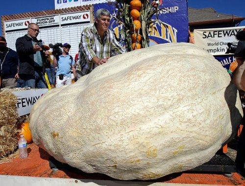 42-ой Международный чемпионат по взвешиванию тыкв прошёл в Калифорнии (16 фото)