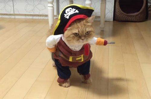 Кот-пират по кличке Зеон