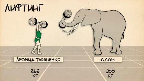Спортивные достижения человека по сравнению со способностями животных (4 фото)