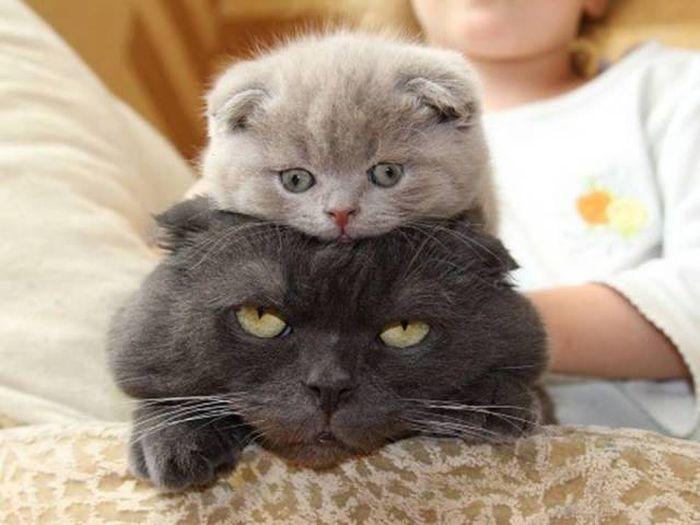 Картинки котят приколы
