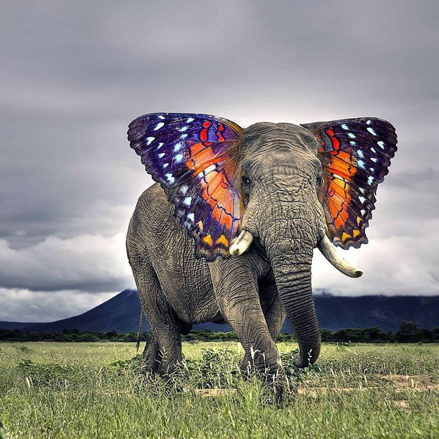 Фото всех животных мира
