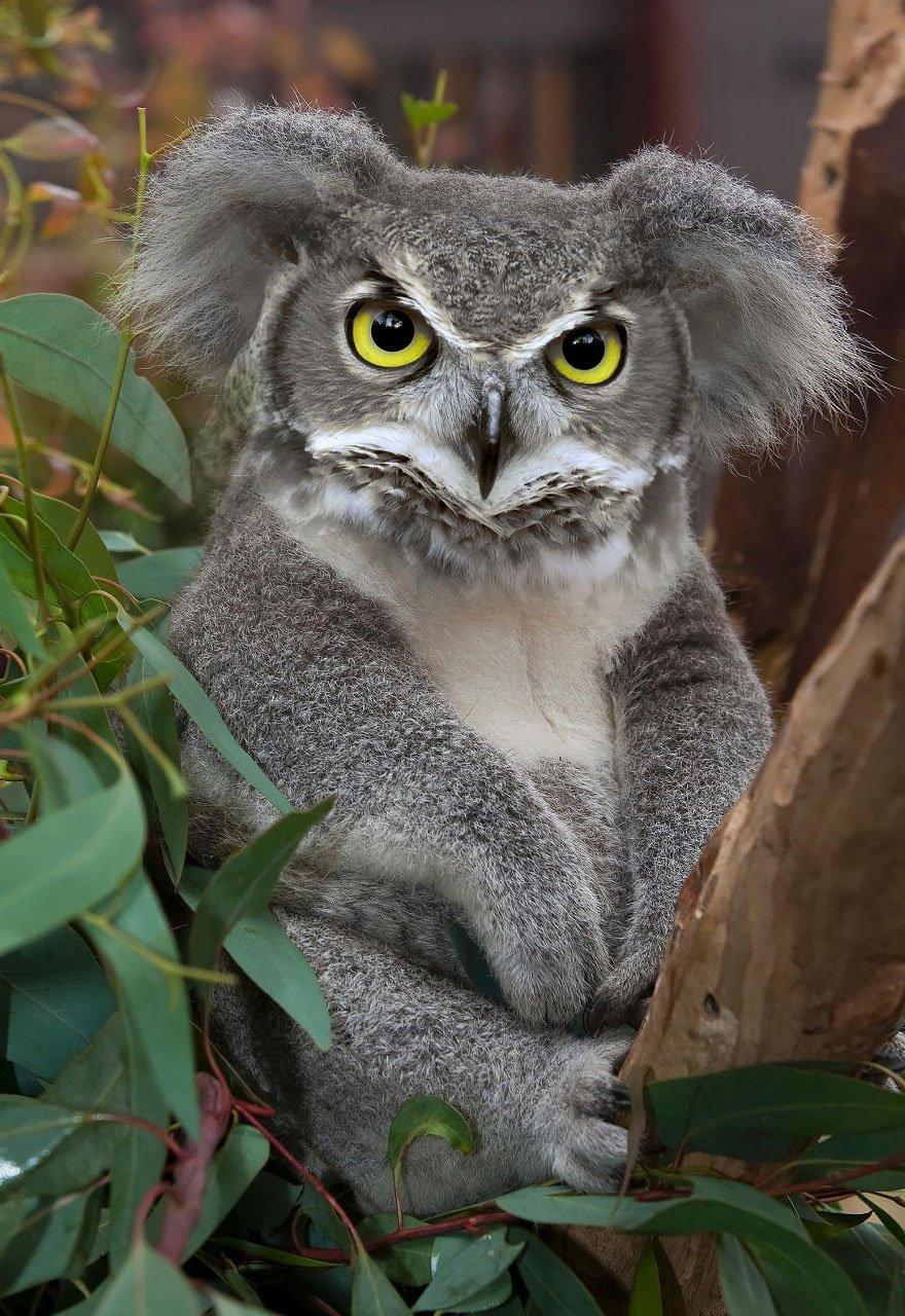 Самые интересные гибриды животных в мире фото