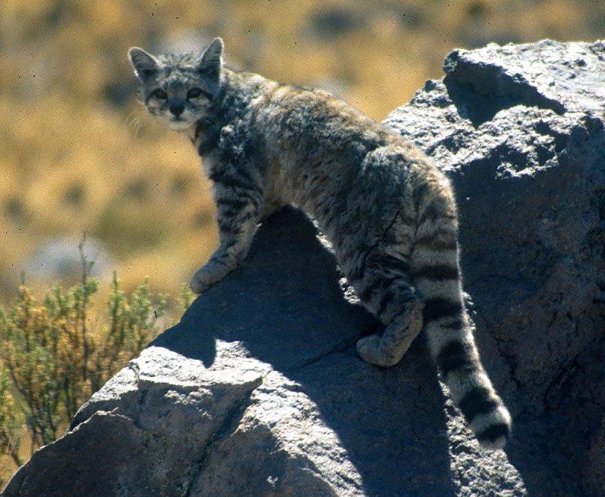 фотографии диких кошек.