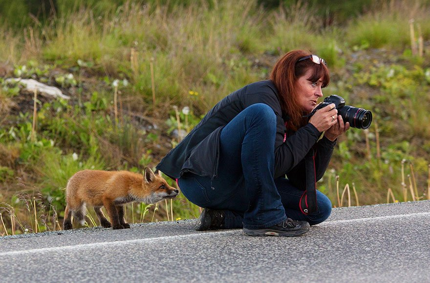 Название животных и их фотографии горизонта
