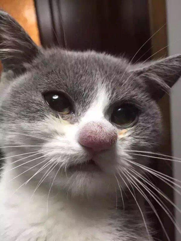 Самые смешные картинки про кошек (15 фото)