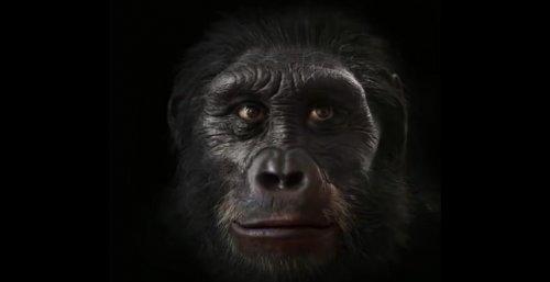 Эволюция человеческого лица за 6.000.000 лет