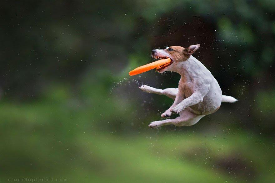 еще летающие щенки картинки никого лучше