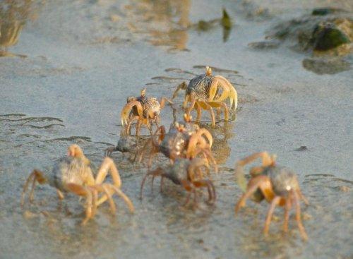 Художественные следы поиска пищи песчаных крабов (16 фото)