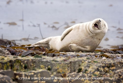 Победители фотоконкурса The Comedy Wildlife Photography Awards (13 фото)