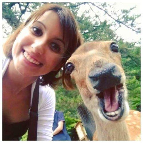 Селфи с животными (21 шт)