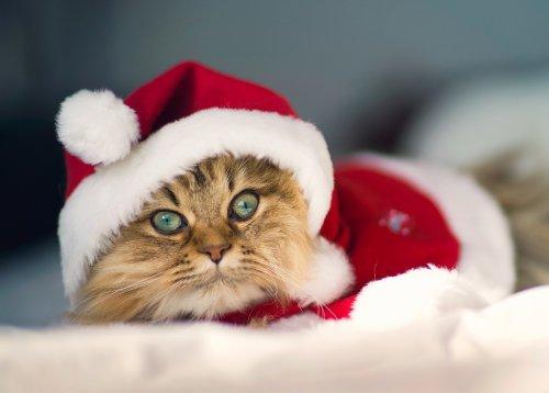 Забавные животные в костюме Санта-Клауса (14 фото)