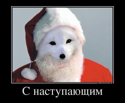 Прикольные демотиваторы для новогоднего настроения (15 шт)