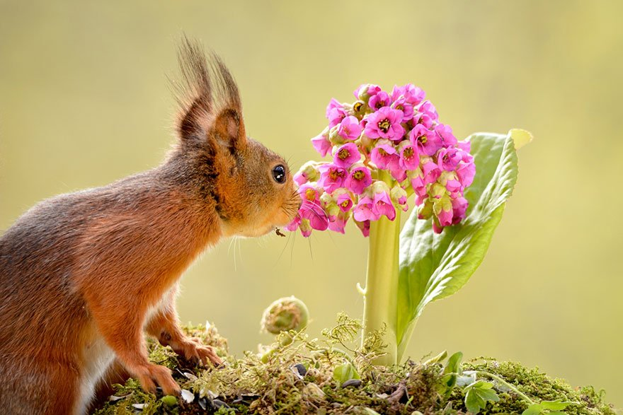 Картинки растение и животное