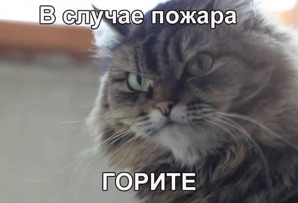 Юмор в картинках - Страница 35 1453387445_memy-s-zhivotnymi-7