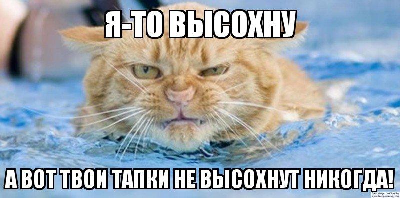 Юмор в картинках - Страница 34 1453387462_memy-s-zhivotnymi-1