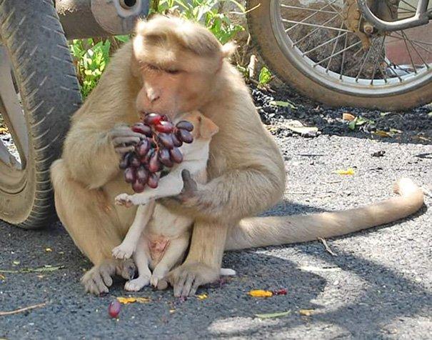 Картинки новогодние с машиной и обезьяны