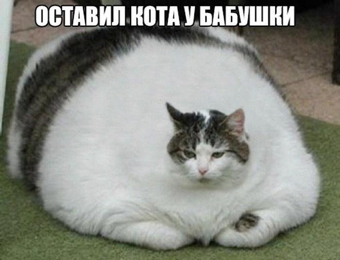 http://www.bugaga.ru/uploads/posts/2016-01/1453486498_foto-19.jpg