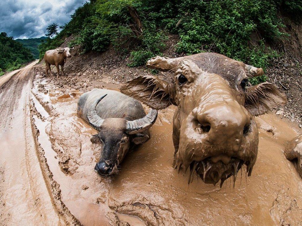 невероятные фотографии животного мира считалось