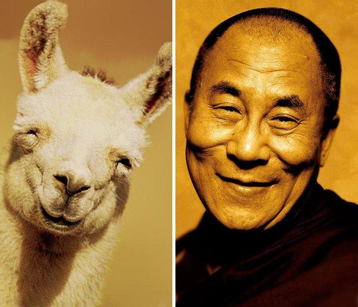 сделать сравнение людей и животных фото работ подготовке внутренних