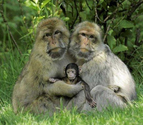 Семейные фотографии из мира животных (14 шт)