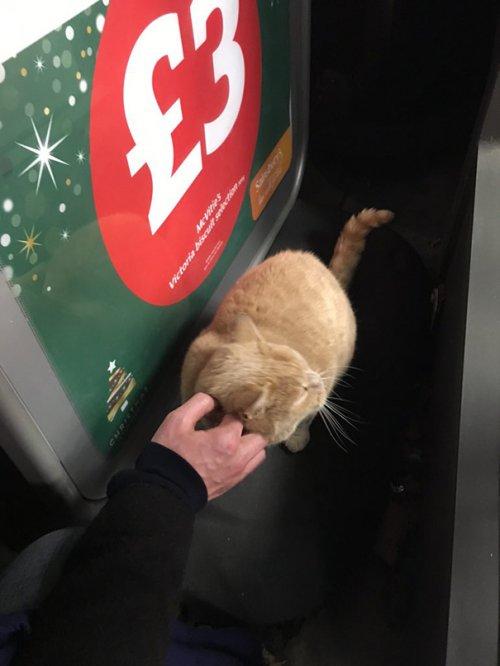 Магазинный кот Олли Оливер (7 фото)