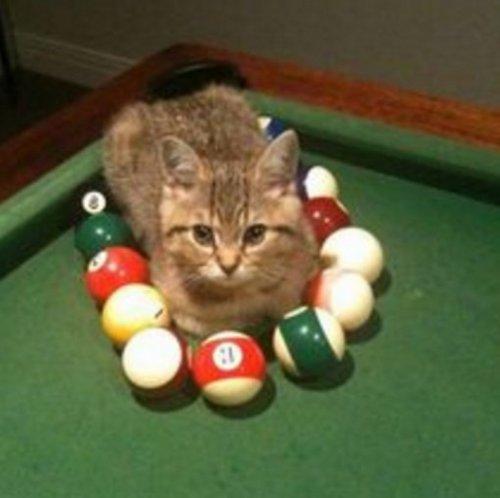 Забавные кошки в осаде (10 фото)
