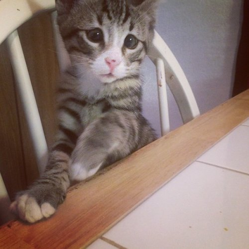 """Котёнок Бам """"Беспокойные глазки"""" (6 фото)"""