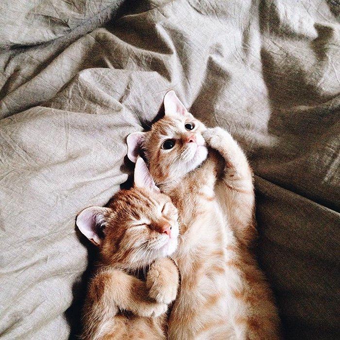 обнимашки кошки смотреть в картинках необычных
