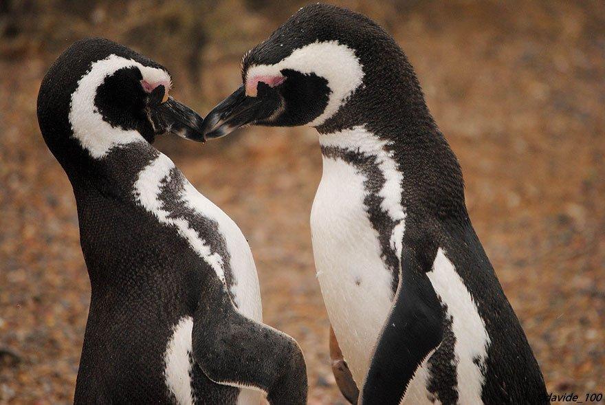 фотографии целующихся животных связи этим