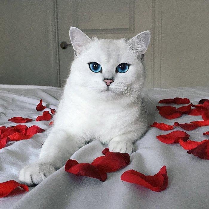 есть красивые котики фото породистые масла