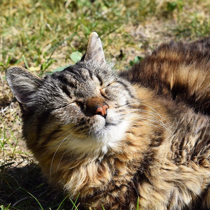 Старая кошка картинка